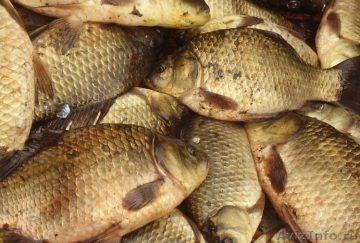 Місцевий житель здійснював незаконну реалізацію риби