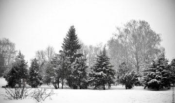 Міська новорічна ялиночка родом із Софіївки