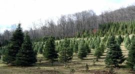 Готуйтесь до новорічних свят без шкоди природі