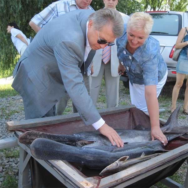 «Червона риба неодмінно має потрапляти на стіл до кожного черкащанина», — зауважив голова Черкаської облдержадміністрації Сергій Тулуб